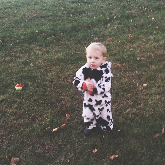 Moo.  #firsthalloween #allaboutthatcandy #vscocam